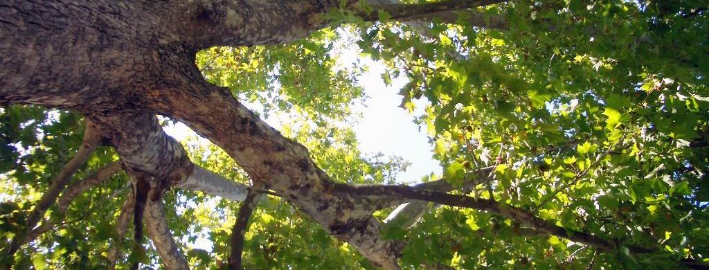 Woodland Tree Banner